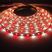 SMD5050 Fresh LED Strip